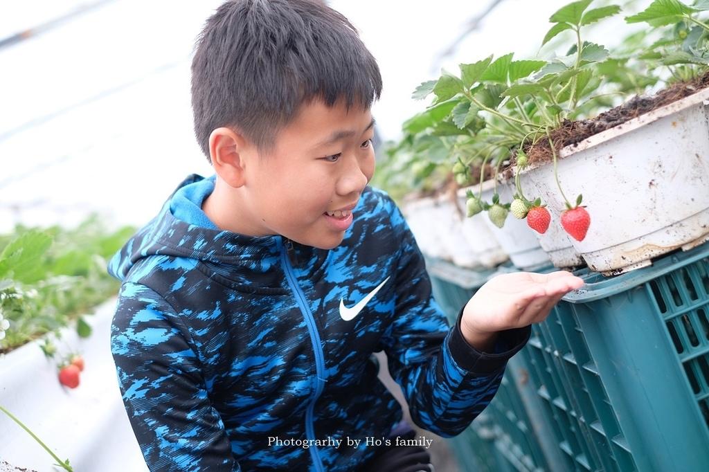 【宜蘭採草莓景點】本事農莊4.JPG