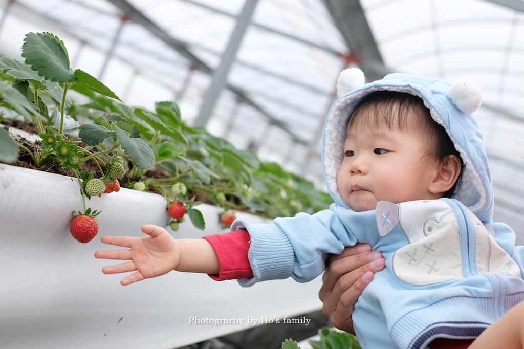 【宜蘭採草莓景點】本事農莊6.JPG