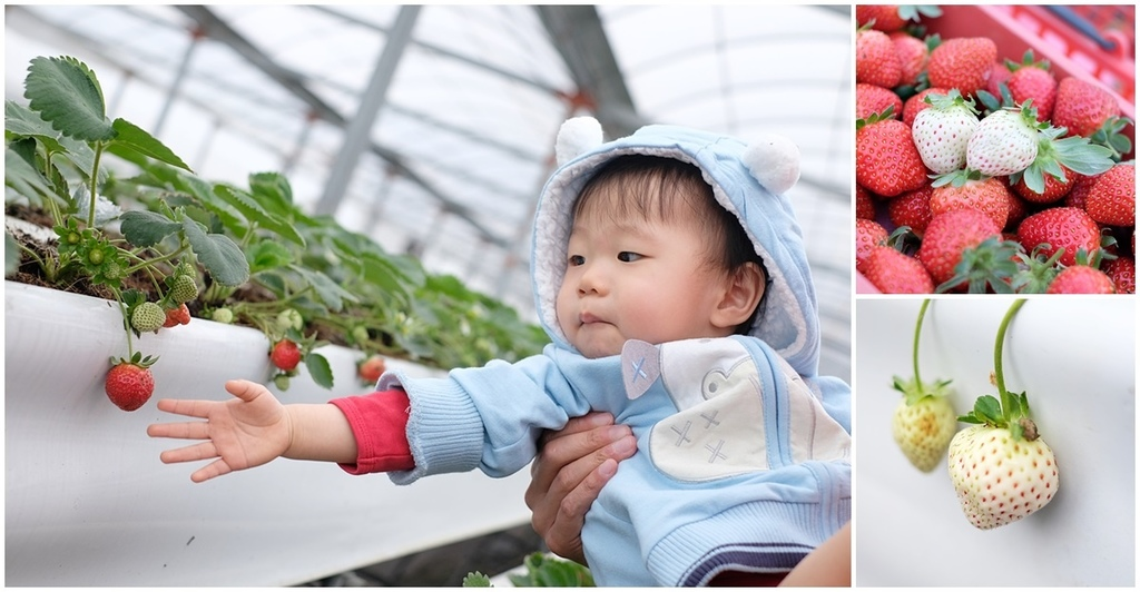 【宜蘭採草莓景點】本事農莊fb.jpg