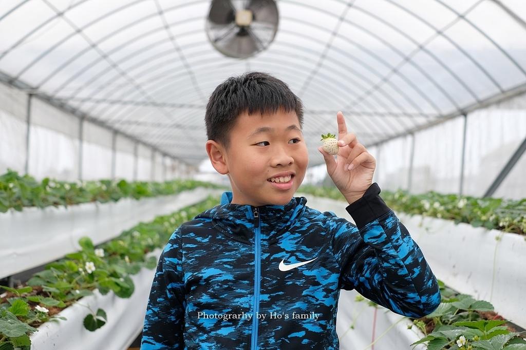【宜蘭採草莓景點】本事農莊12.JPG