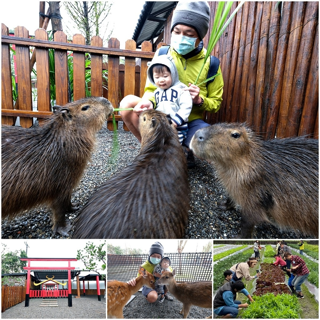 【宜蘭親子農場】張美阿嬤農場~餵梅花鹿、水豚、日式庭園穿和服,雨天景點備案.jpg