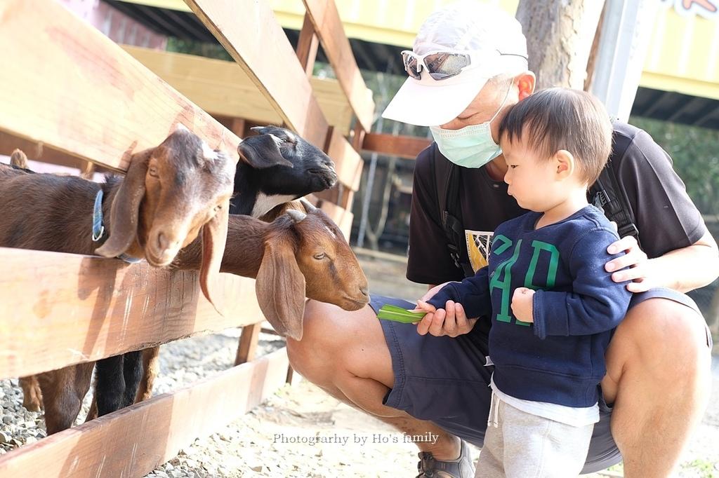 【雲林親子景點】古坑鹿營親子農場~滑草、餵小動物、落羽松林、親子餐廳22.JPG