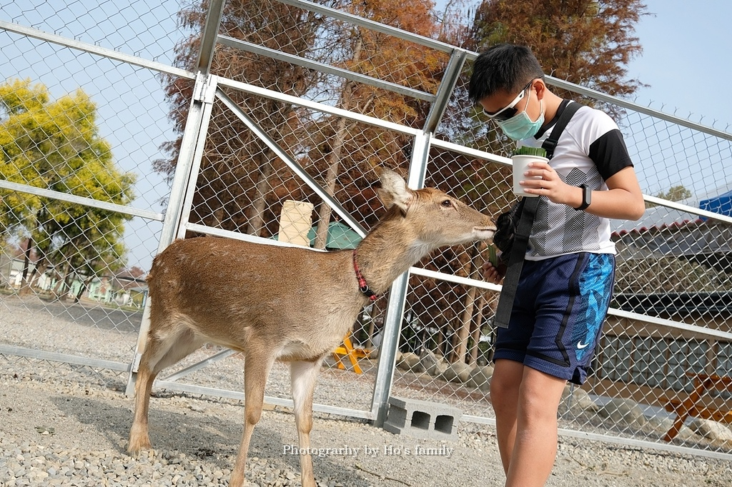 【雲林親子景點】古坑鹿營親子農場~滑草、餵小動物、落羽松林、親子餐廳26.JPG