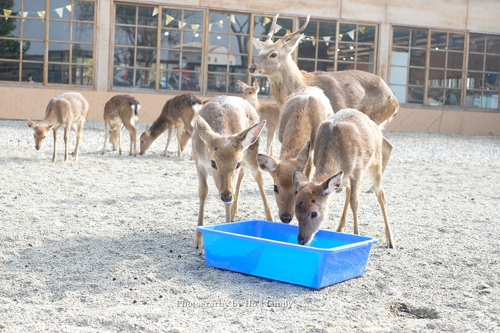 【雲林親子景點】古坑鹿營親子農場~滑草、餵小動物、落羽松林、親子餐廳27.JPG