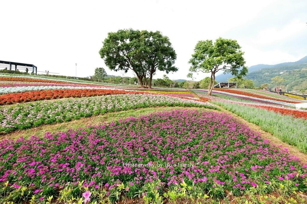 北投社三層崎公園2021花況、交通、ig拍照打卡景點9.JPG