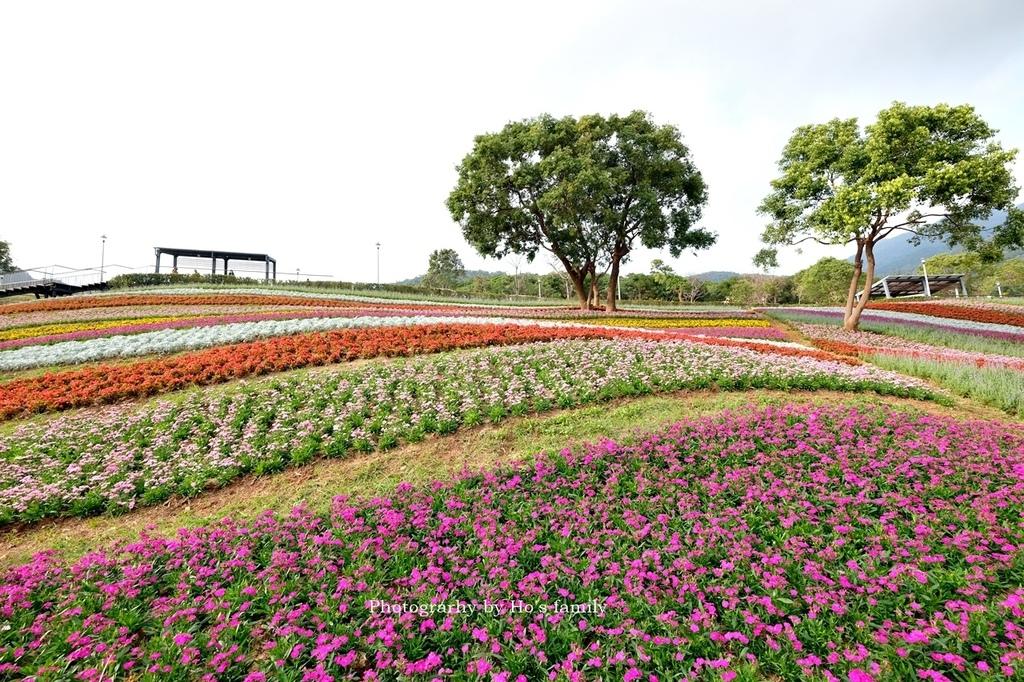 北投社三層崎公園2021花況、交通、ig拍照打卡景點13.JPG