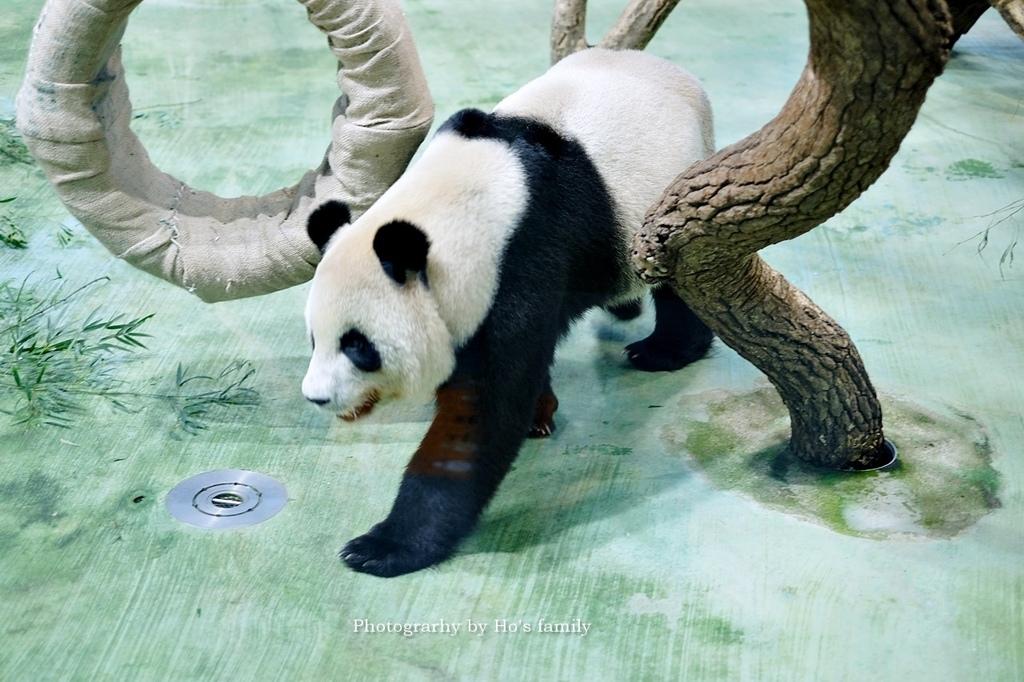 台北動物園貓纜二日遊交通住宿景點安排11.JPG