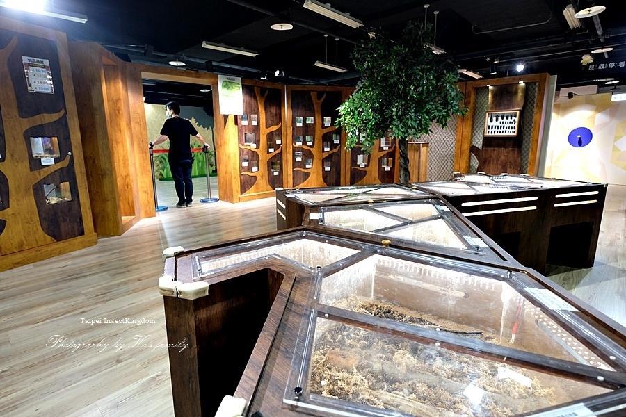 台北大昆蟲展|兒童新樂園室內親子展覽4.JPG