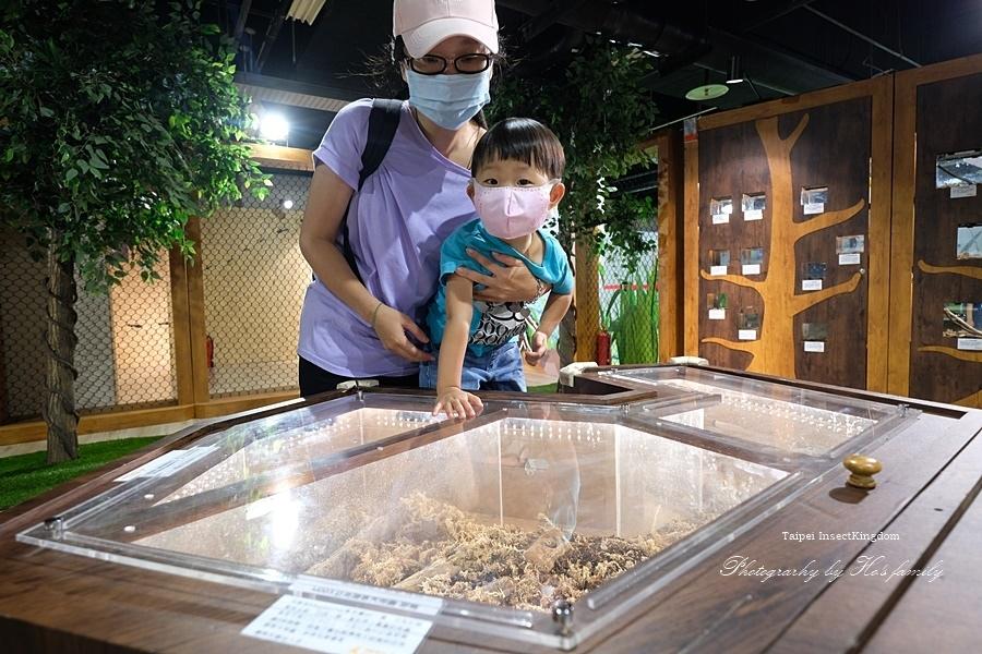 台北大昆蟲展|兒童新樂園室內親子展覽5.JPG