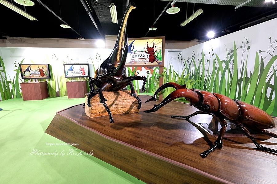 台北大昆蟲展|兒童新樂園室內親子展覽12.JPG