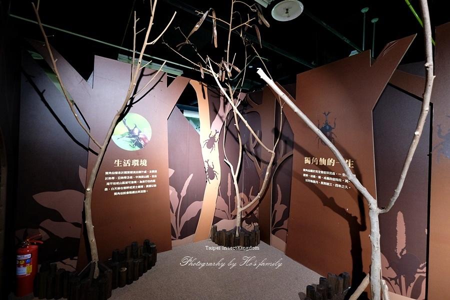 台北大昆蟲展|兒童新樂園室內親子展覽29.JPG