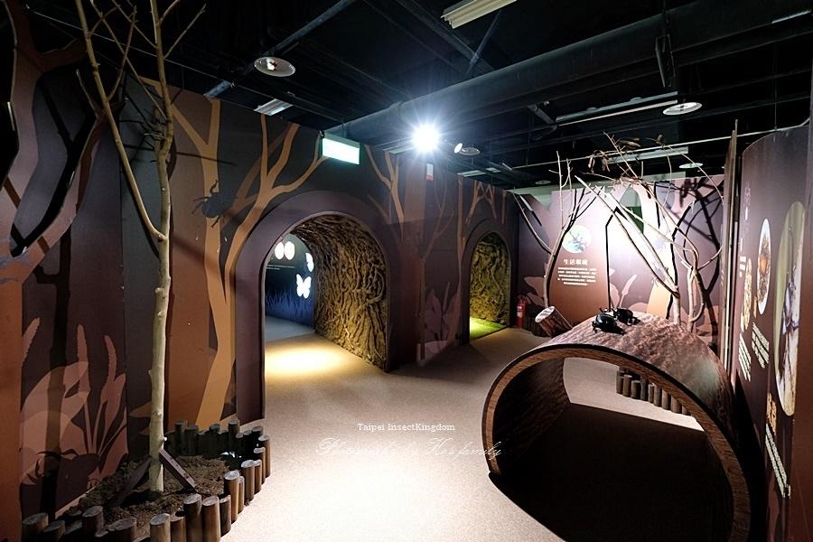 台北大昆蟲展|兒童新樂園室內親子展覽28.JPG