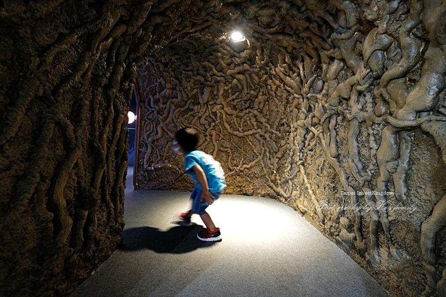 台北大昆蟲展|兒童新樂園室內親子展覽26.JPG