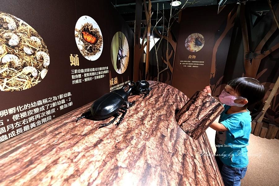 台北大昆蟲展|兒童新樂園室內親子展覽31.JPG