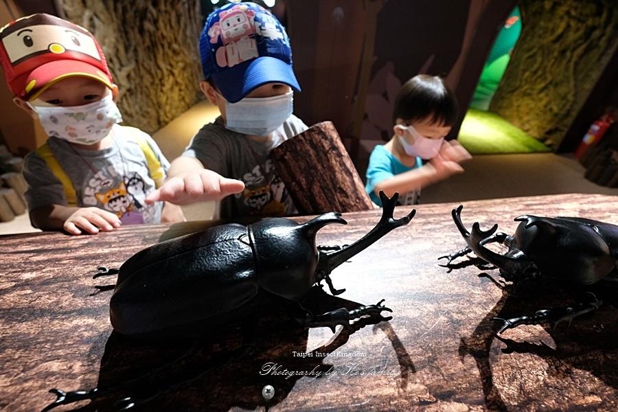 台北大昆蟲展|兒童新樂園室內親子展覽32.JPG
