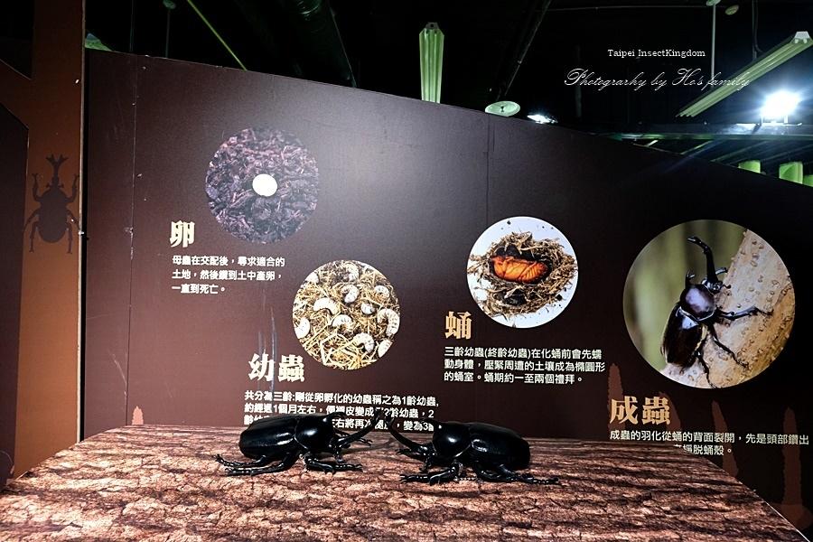 台北大昆蟲展|兒童新樂園室內親子展覽30.JPG