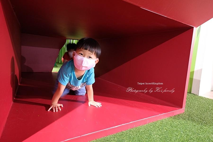 台北大昆蟲展|兒童新樂園室內親子展覽39.JPG