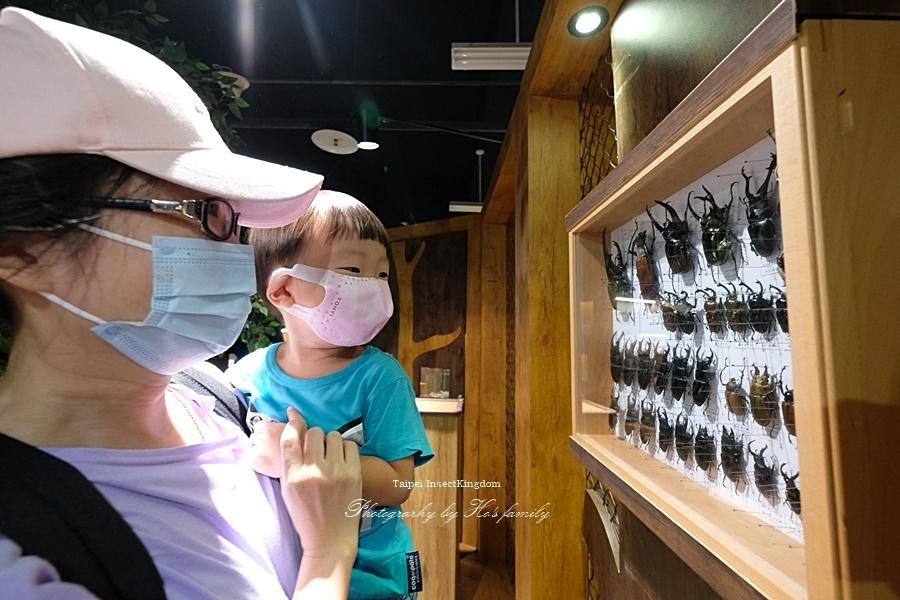 台北大昆蟲展|兒童新樂園室內親子展覽40.JPG