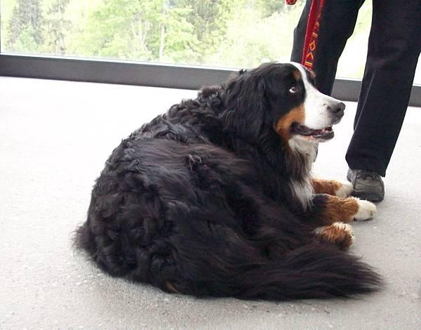 瑞士主人很喜歡帶狗旅行 469.jpg