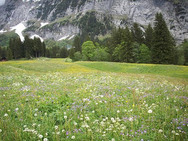 野地的花及雪景 562.jpg