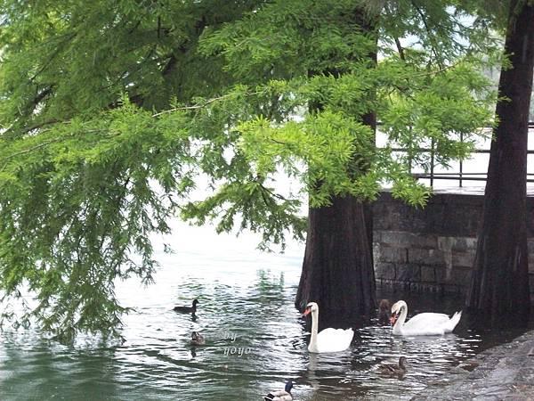 馬喬雷湖景之五 1146.jpg