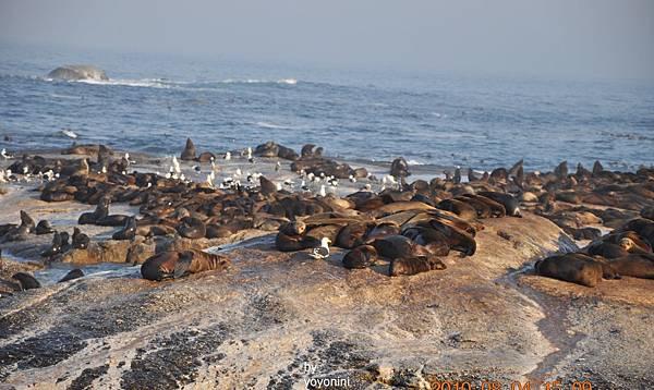 海豹景之一DSC_0099-1.JPG