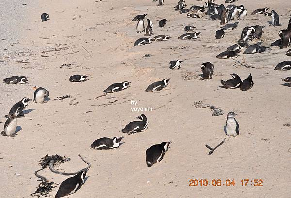 在沙土上企鵝DSC_0192-1.JPG