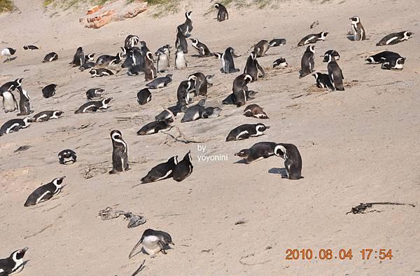 快樂企鵝天堂DSC_0194-1.JPG
