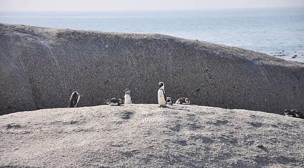 岩口上企鵝DSC_0195-1.JPG