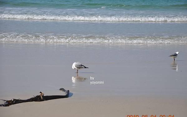 海景與鴿子DSC_0226-1.JPG