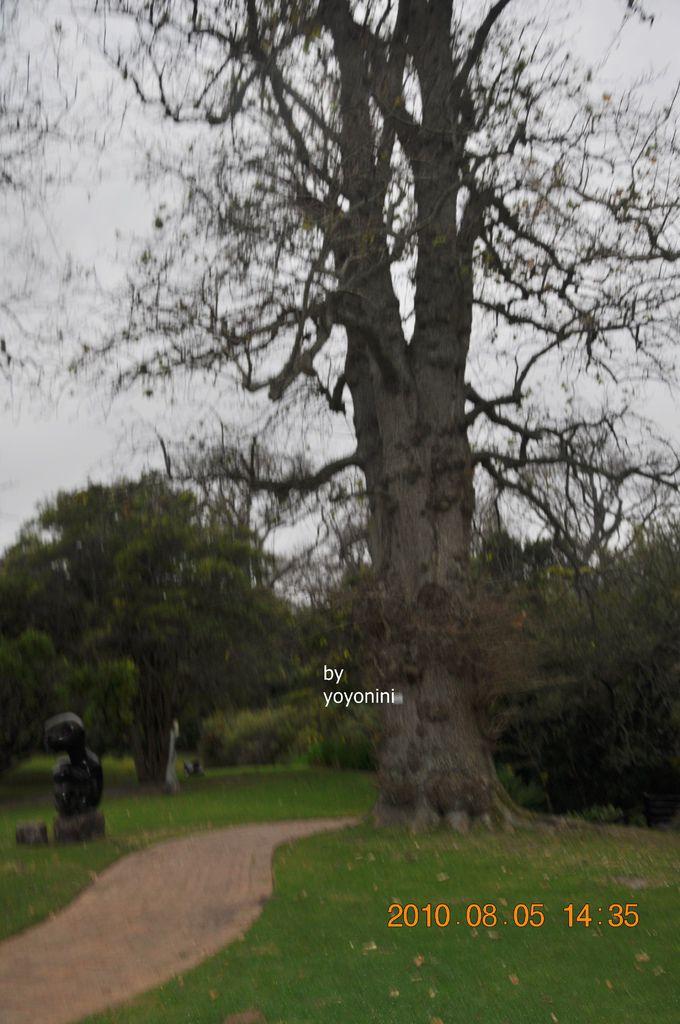 植物園一景DSC_0255-1.JPG
