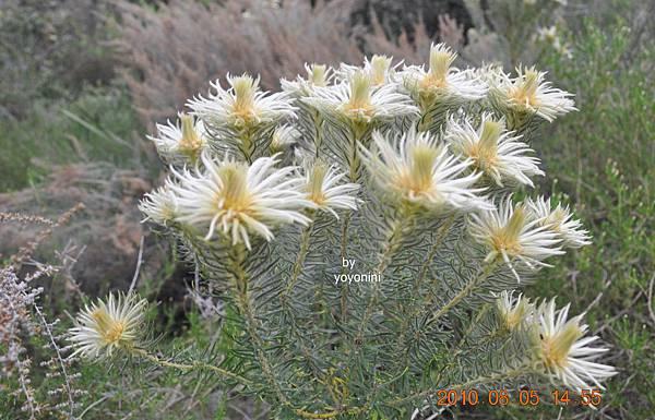 是植物或花DSC_0267-1.JPG