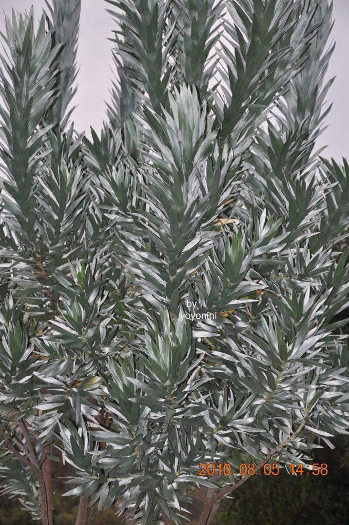 不知名植物DSC_0270-1.JPG