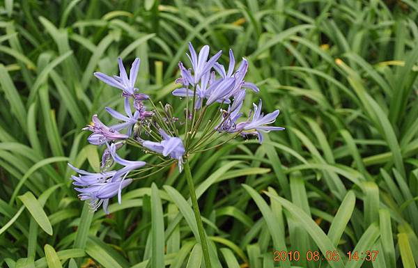 植物園的花DSC_0257-1.JPG