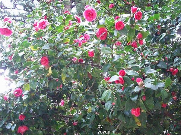 100_2925長滿紅色花.JPG