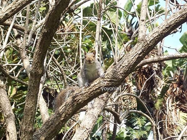 100_2930在樹上松鼠.JPG