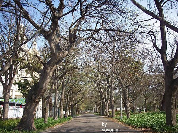 100_2968枯樹行道之一.JPG
