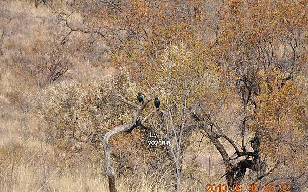 這裡也有鳥ㄌDSC_0464.JPG