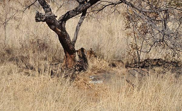 二隻隱身在樹幹下DSC_0469.JPG
