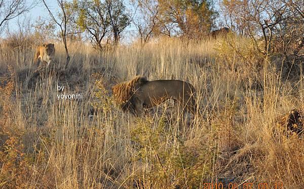 DSC_0537看見母獅子臉.JPG