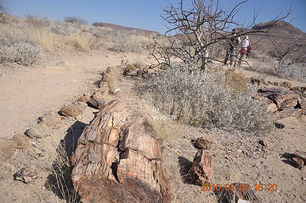 DSC_0827化石.JPG