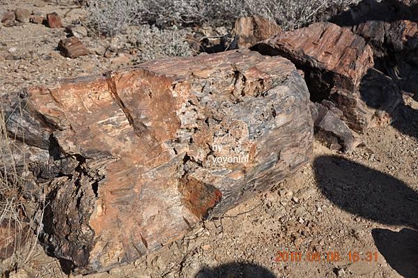 DSC_0833斷裂化石.JPG