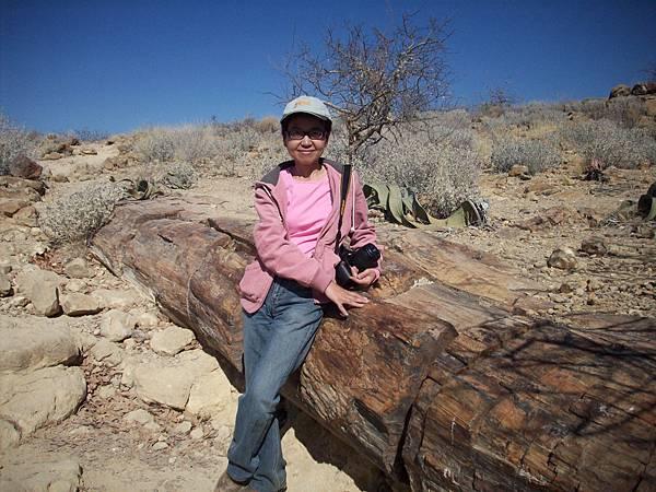 100_3104在古董巨木化石.JPG