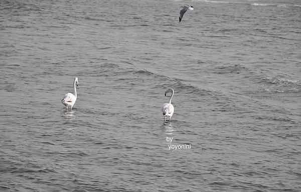 DSC_0039拍到海鳥.JPG