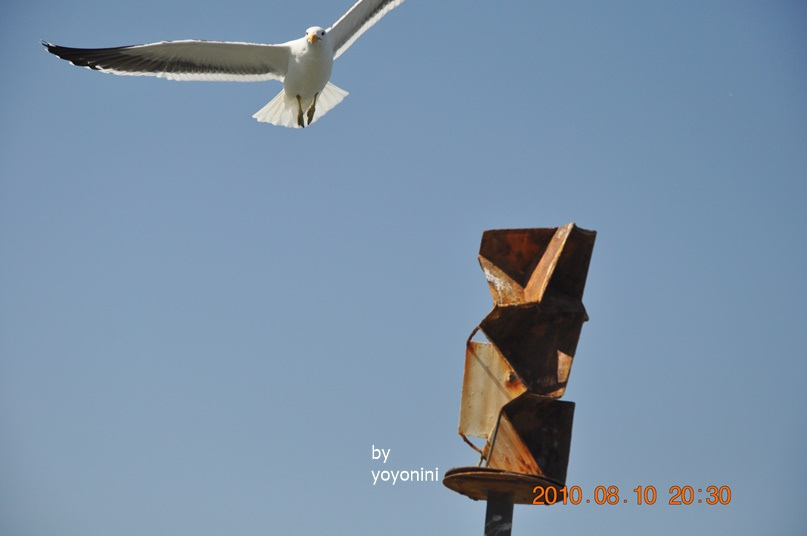 DSC_0235海鷗飛翔.JPG