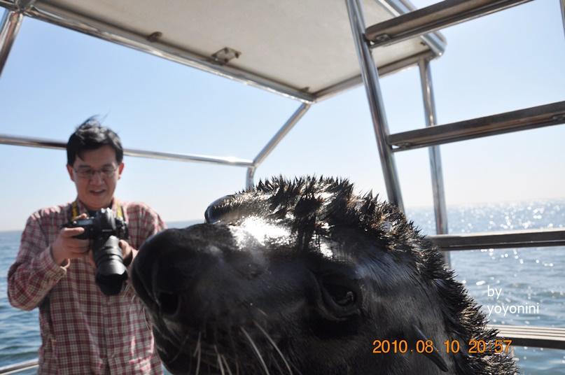 DSC_0240軟毛海豹是主角.JPG