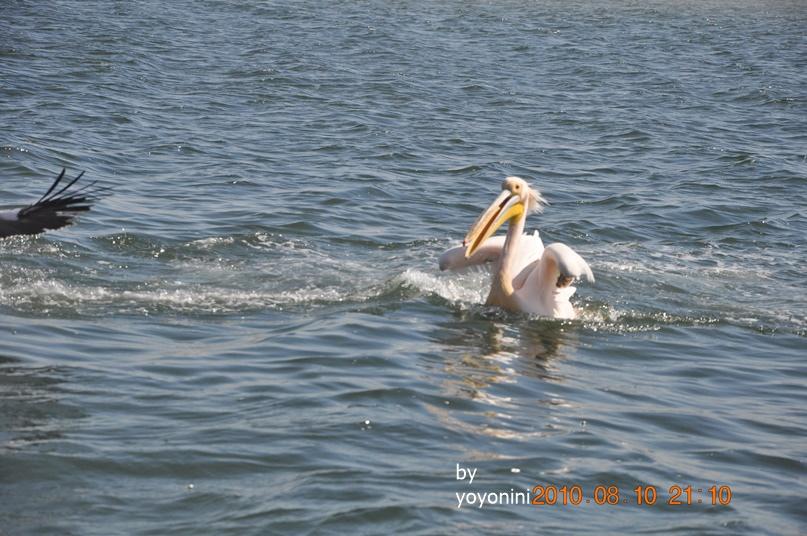 DSC_0267你在水中很開心唷.JPG
