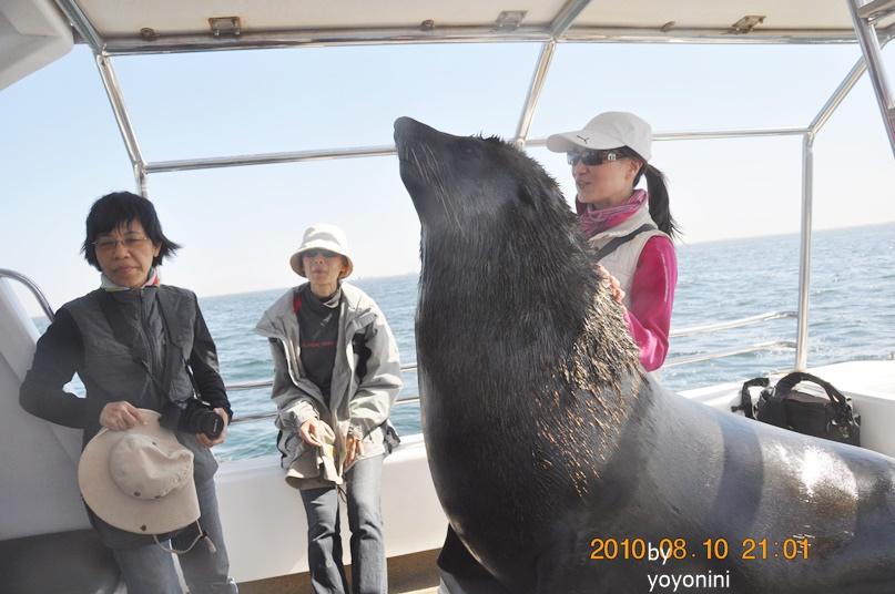 DSC_0248團圓觸摸軟毛海豹.JPG