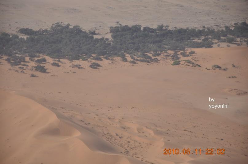 DSC_0483紅沙漠與綠色植物.JPG