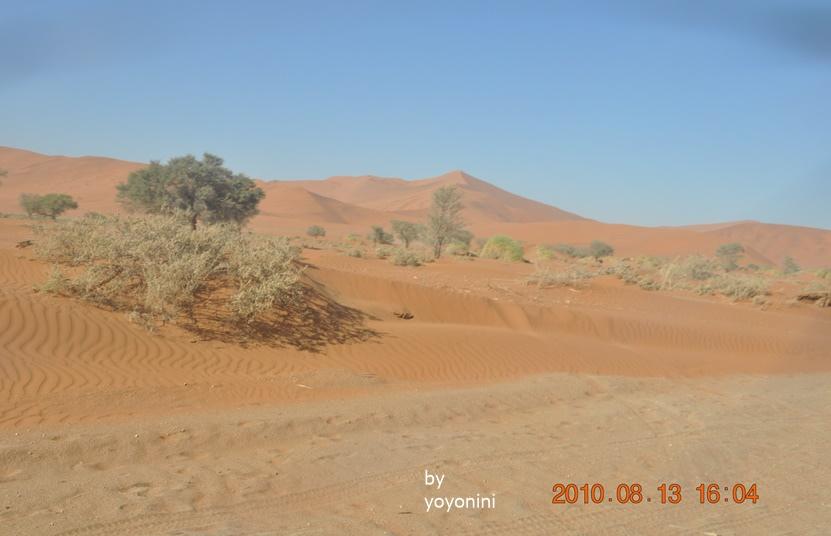 DSC_0597沙漠風光.JPG